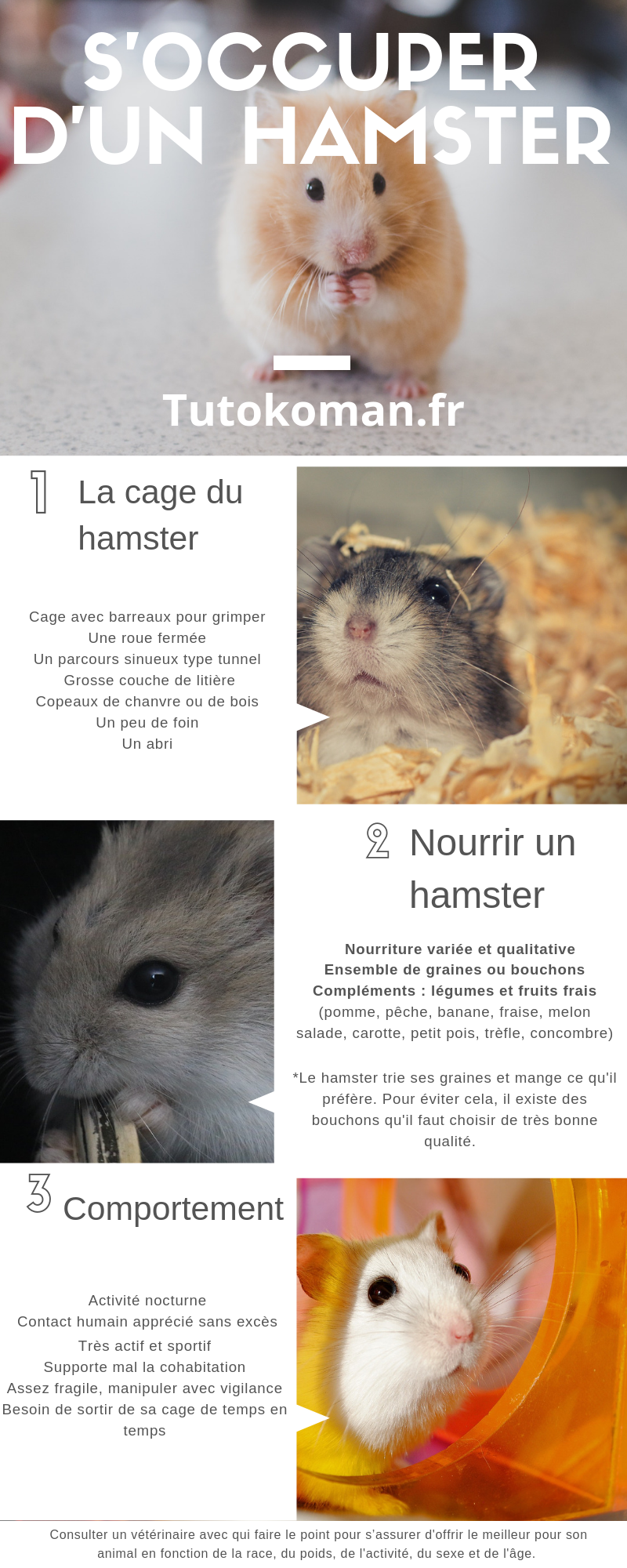 infographie hamster