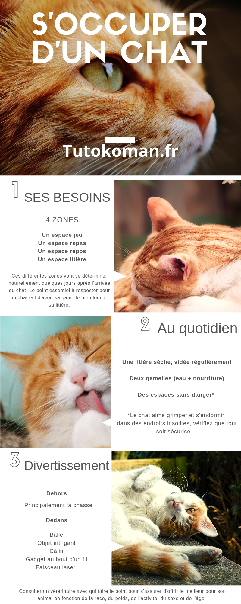 infographie chat